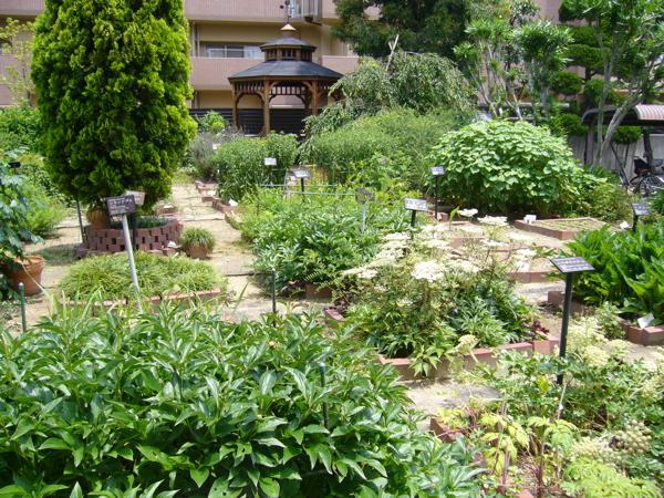 7月に入り、薬用植物園はすっかり緑で覆われています。