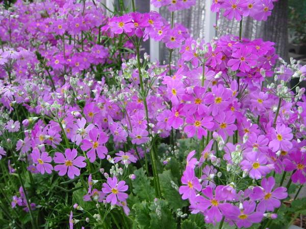 植物園に毎日新しい花が咲き始めました。