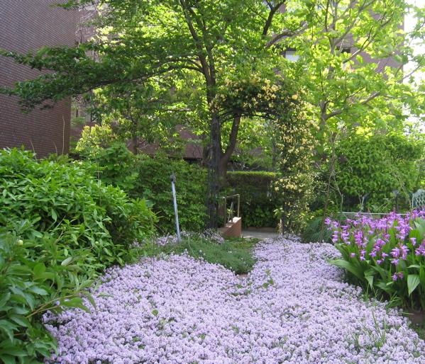 植物園は一年で最も美しい季節を迎えています。