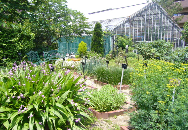 梅雨の季節になり、植物も大きく成長し、緑が目立ちます。
