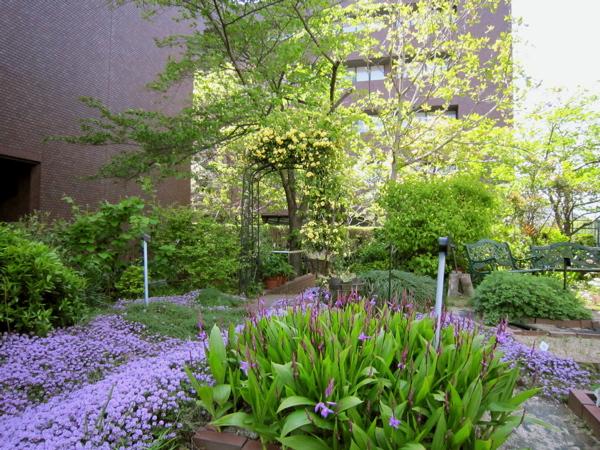 薬用植物園が一年でもっとも美しい季節になりました。