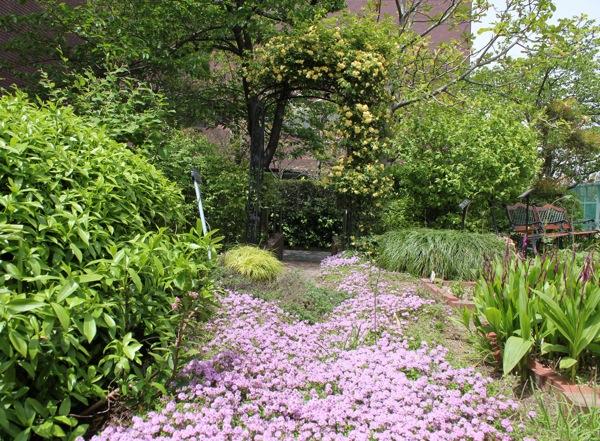 5月の薬用植物園は芳しい花の香りでいっぱいです。