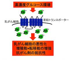 高血糖と乳がん_1.jpg